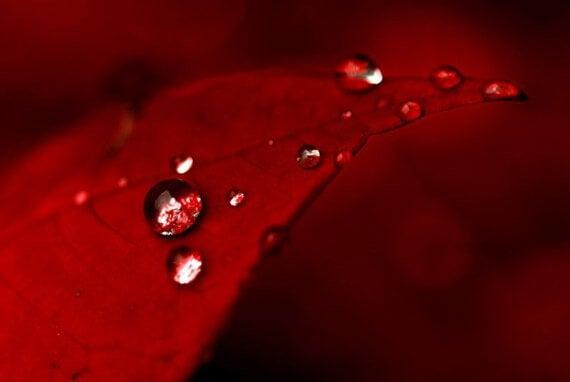Vermelho: psicologia das cores