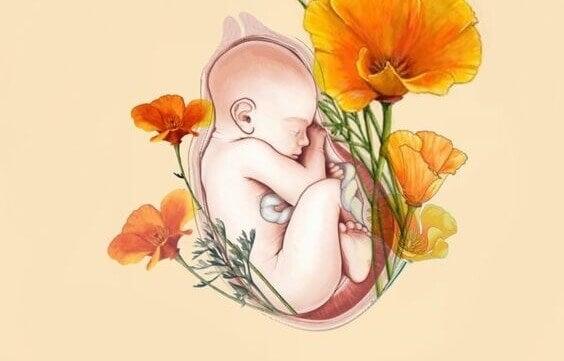 Nascimento de uma criança