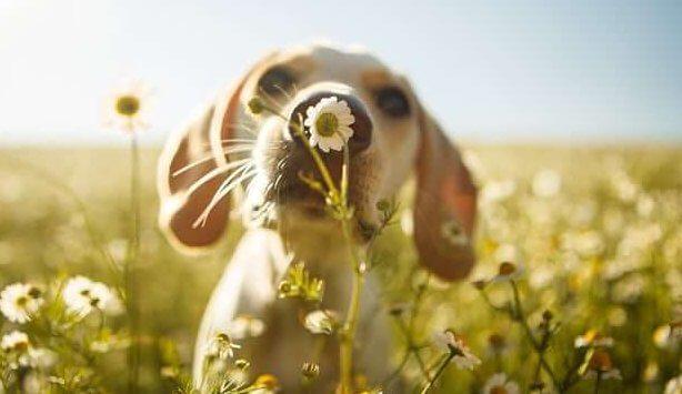 A empatia dos cachorros