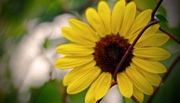 Flor representando a felicidade