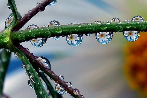 Gotas de orvalho em planta