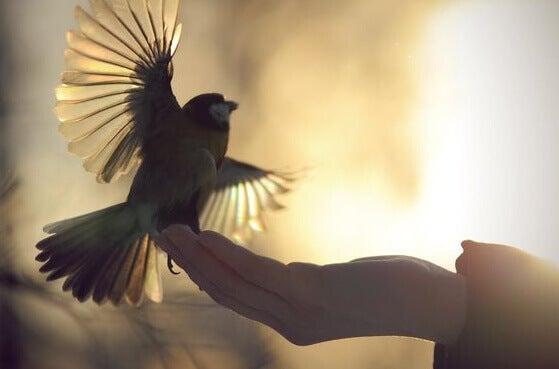 Dedos sustentando passarinho