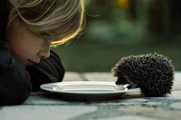 A bondade com os animais