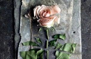 Violência passiva: feridas profundas que parecem superficiais