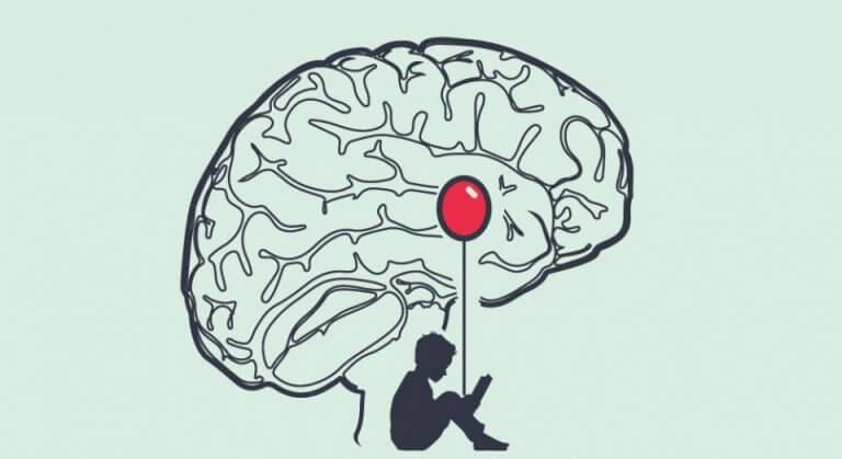 A anatomia do medo no cérebro humano