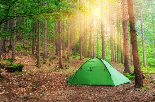 Acampar no meio da floresta