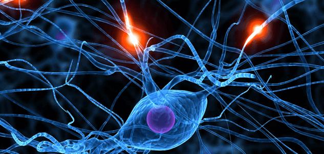 Como nosso cérebro processa a raiva?
