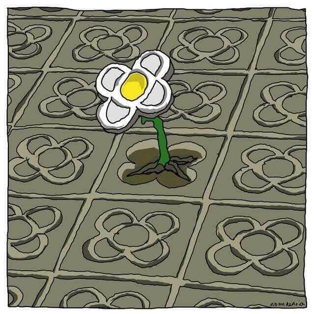 Flor nascendo em meio à adversidade