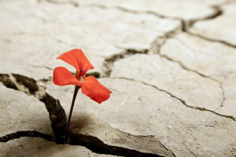 Flor crescendo em condição adversa