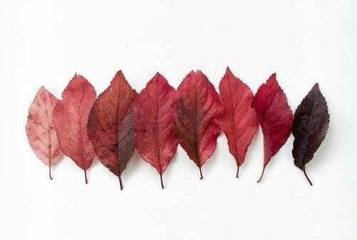 Folhas vermelhas de outono
