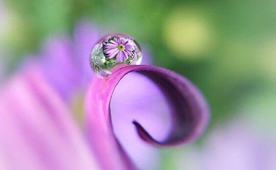 Gota de orvalho em flor