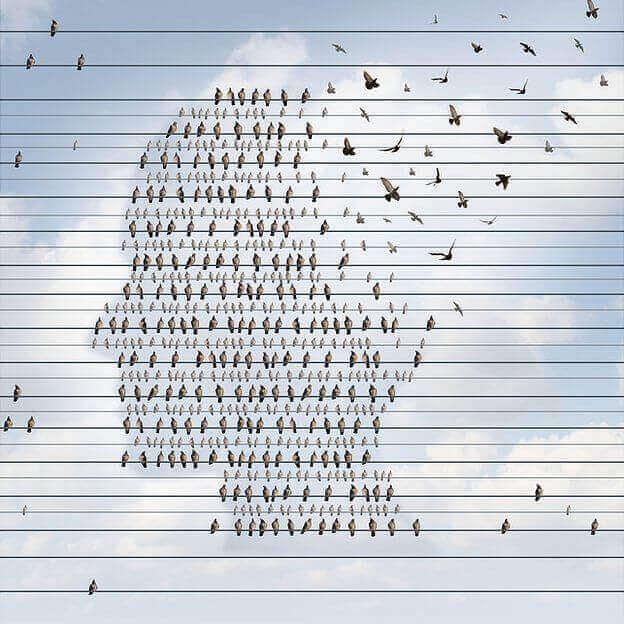 Pássaros em fios formando cabeça