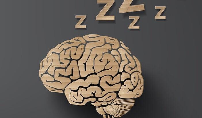 Como o cérebro age durante o sono?