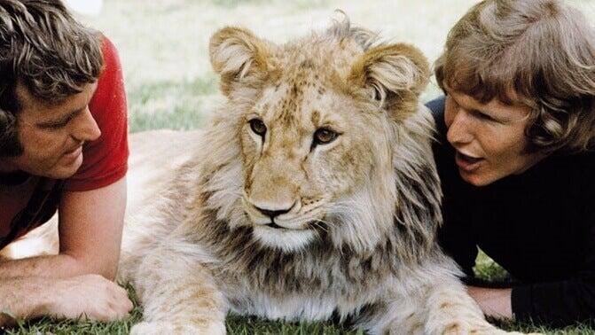 Christian, o leão