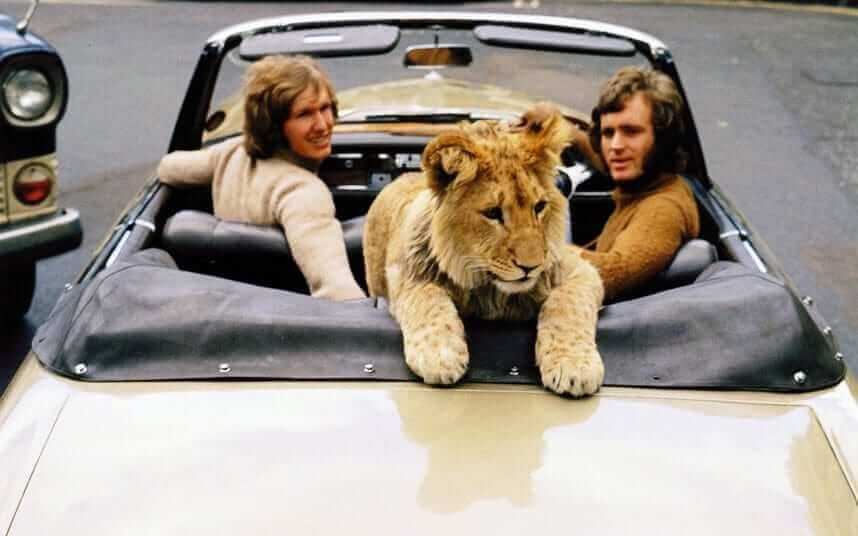 Christian, o leão, passeando de carro