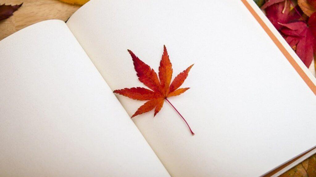Folha de outono dentro de livro