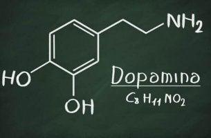 Dopamina: o que é e quais são suas funções em nosso corpo?