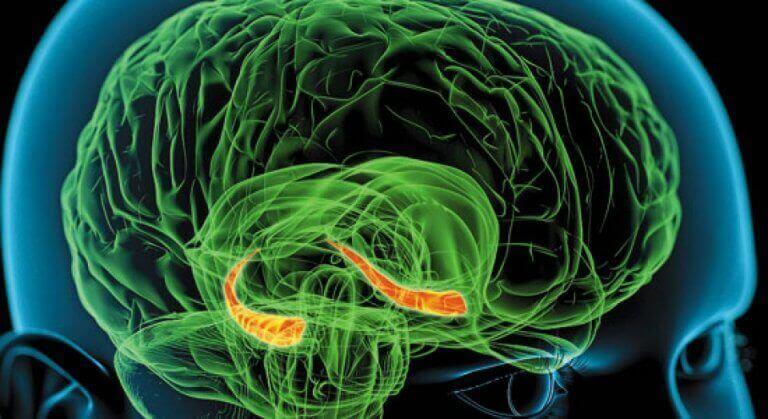 Hipocampo em destaque no cérebro humano