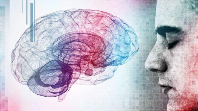O cérebro e o ser humano