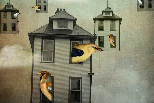 Pássaros nas janelas de casinhas pequenas