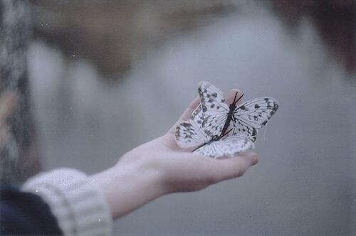 Mão segurando borboletas
