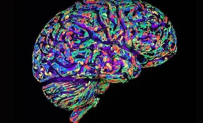 Cérebro humano pintado de várias cores
