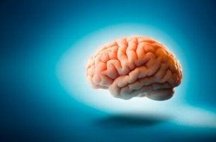 Mitos sobre o cérebro humano