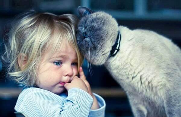 Gatoterapia: 5 benefícios de viver com um gato