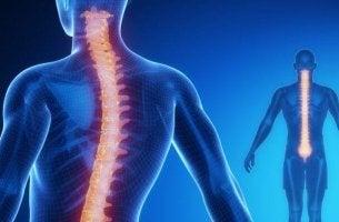 Medula espinhal: anatomia e fisiologia
