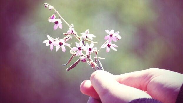 Mão segurando flores pequenas