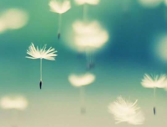 Flores caindo