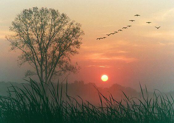 Sol se pondo na natureza