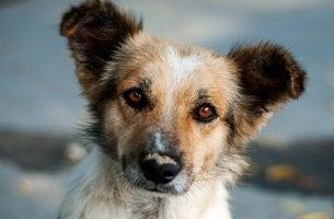 O cachorrinho curioso, um bonito relato sobre o destino