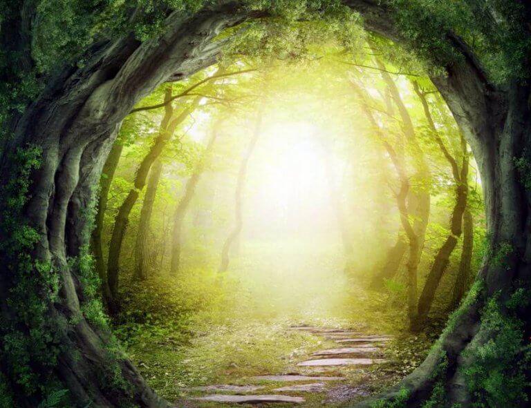 Caminho em floresta encantada