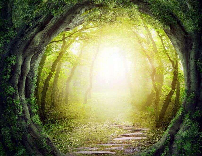 Caminho mágico em floresta