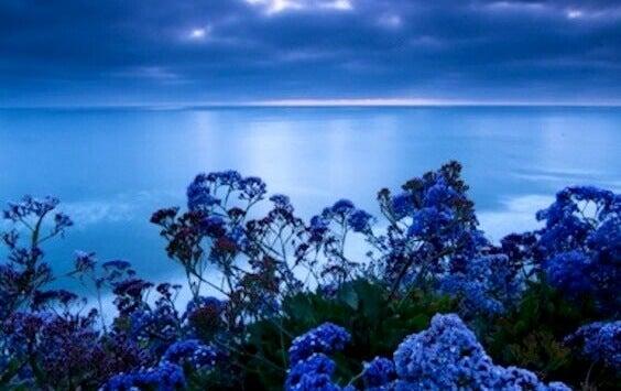 A cor que reduz o estresse: conheça a tonalidade da calma
