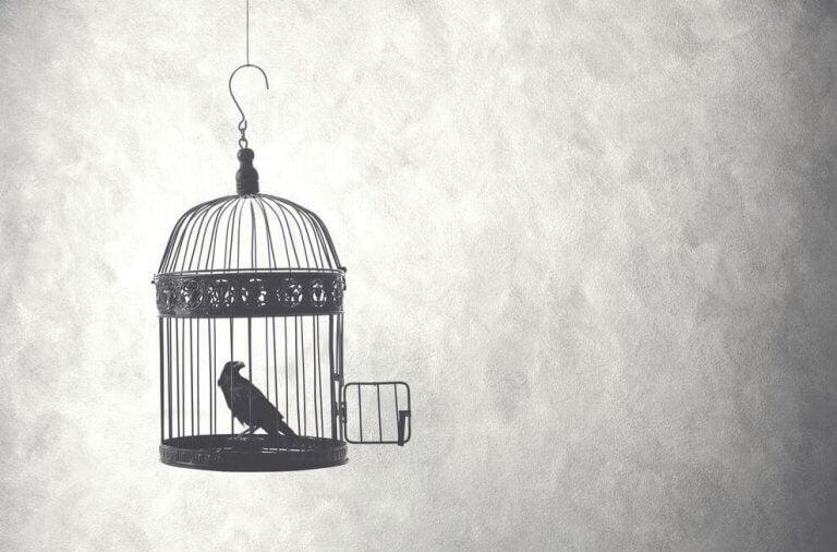 Pássaro preso em gaiola