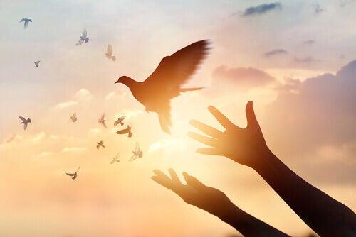 Pássaros voando em liberdade