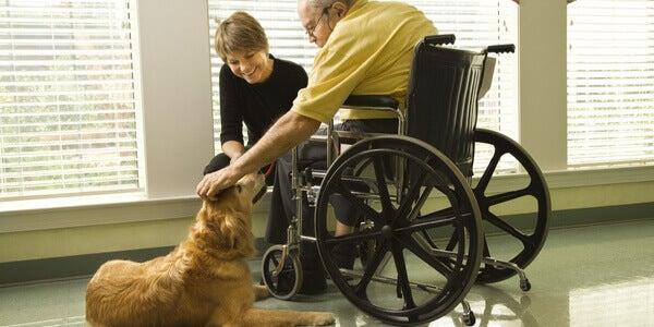 Cão usado como parte de tratamento