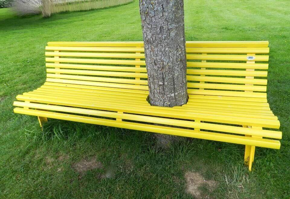 Árvore no meio de banco amarelo