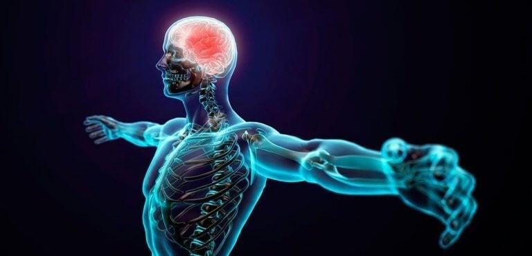 Corpo humano e psicologia