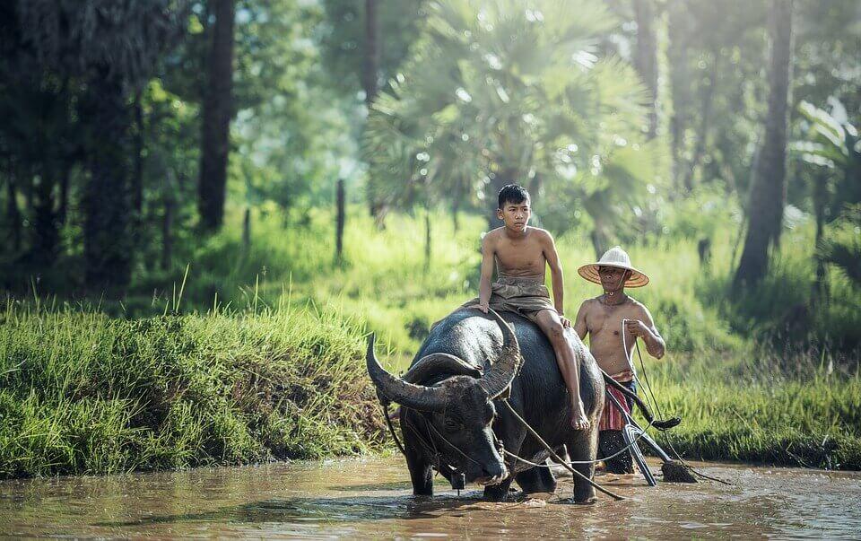 Jovem asiático andando em búfalo