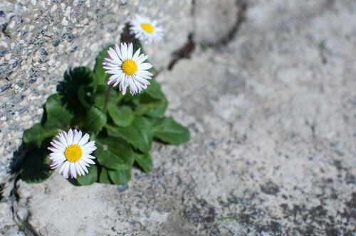 Flores crescendo em terreno árido