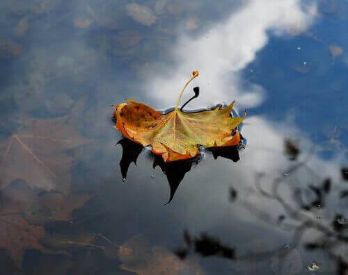 Folha flutuando em lago