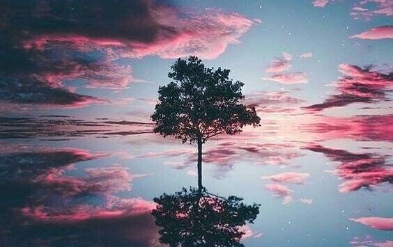 Árvore refletida em lago