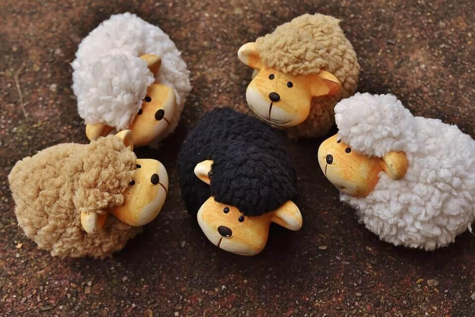 A ovelha negra da família