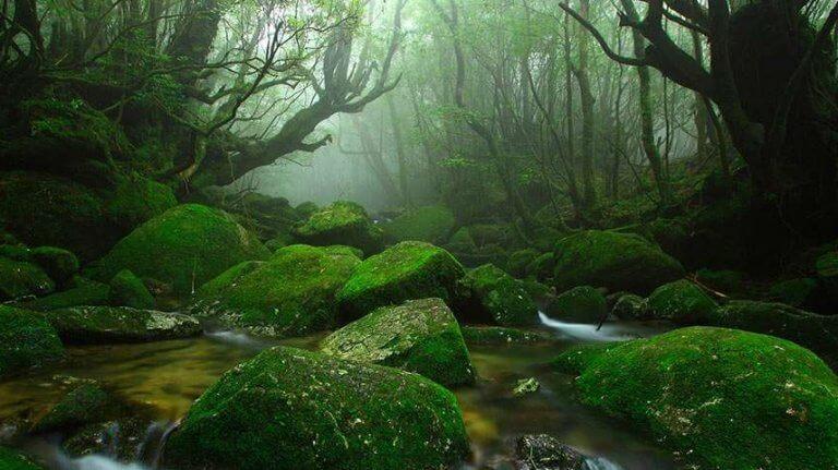 Floresta silenciosa