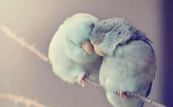 Pássaros apoiando um ao outro