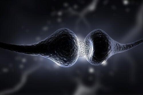 Sinapse no cérebro humano