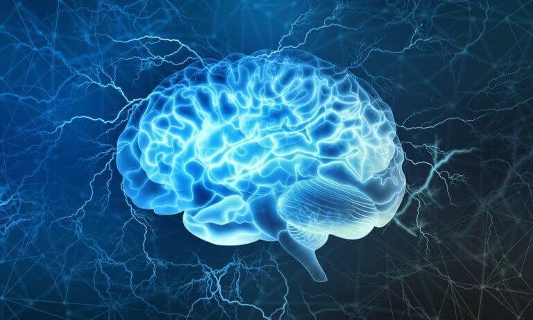 Córtex pré-frontal: uma das áreas mais interessantes do cérebro